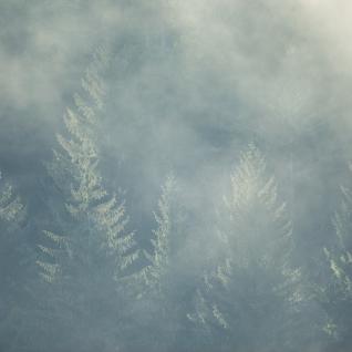 Morning Mist at Prairie Creek Redwoods State Park, California by Paul Zaretsky Photography